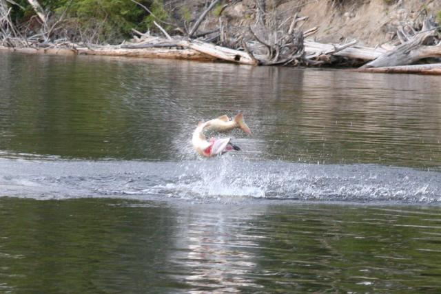Anglers looking for better places to fish at Tappan Lake?